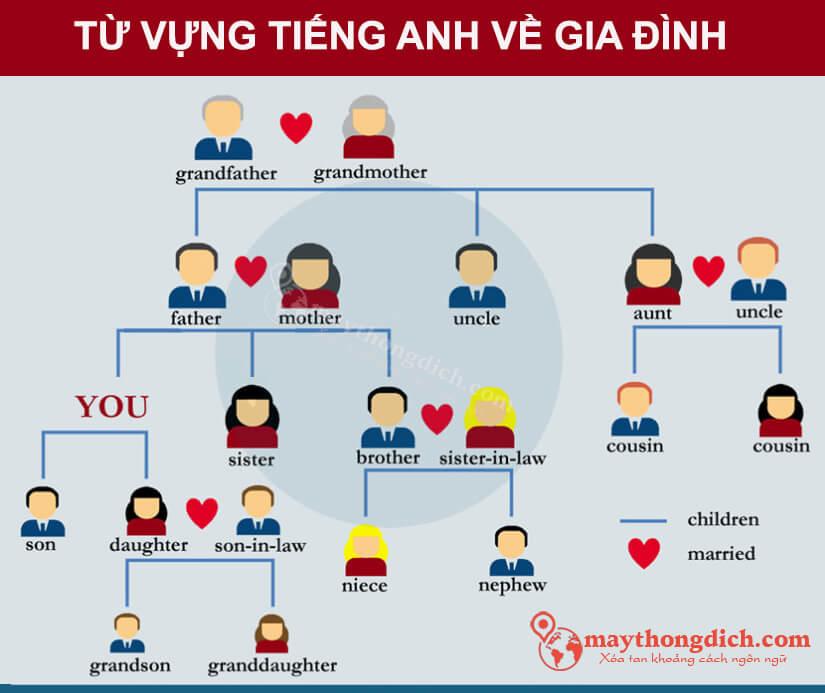 Từ vựng tiếng Anh về các mối quan hệ họ hàng