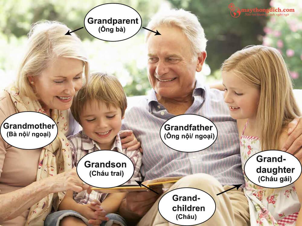 Từ vựng về chủ đề phả hệ trong gia đình bằng tiếng Anh